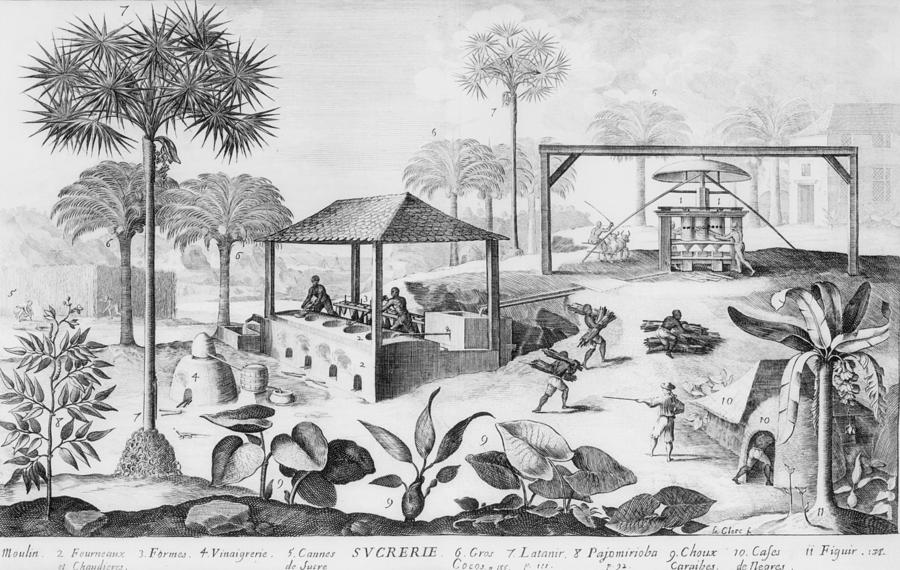 Sugar Production In The West Indies Photograph