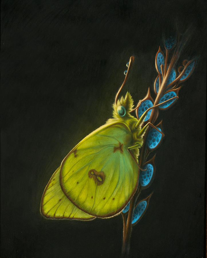 Nature Painting - Sulpher by Shawn Kawa