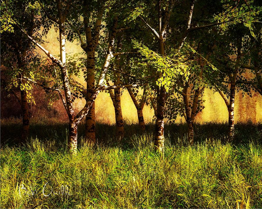 Summer Birch Trees Photograph  - Summer Birch Trees Fine Art Print