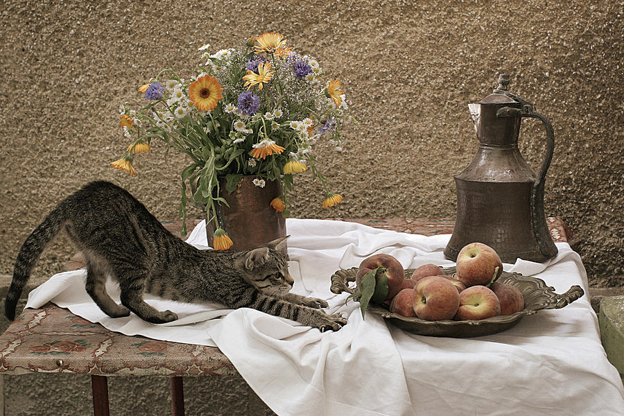 Summer Composition With Cat Photograph  - Summer Composition With Cat Fine Art Print