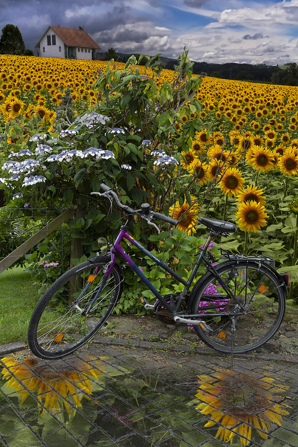 Summer Cycling Photograph  - Summer Cycling Fine Art Print