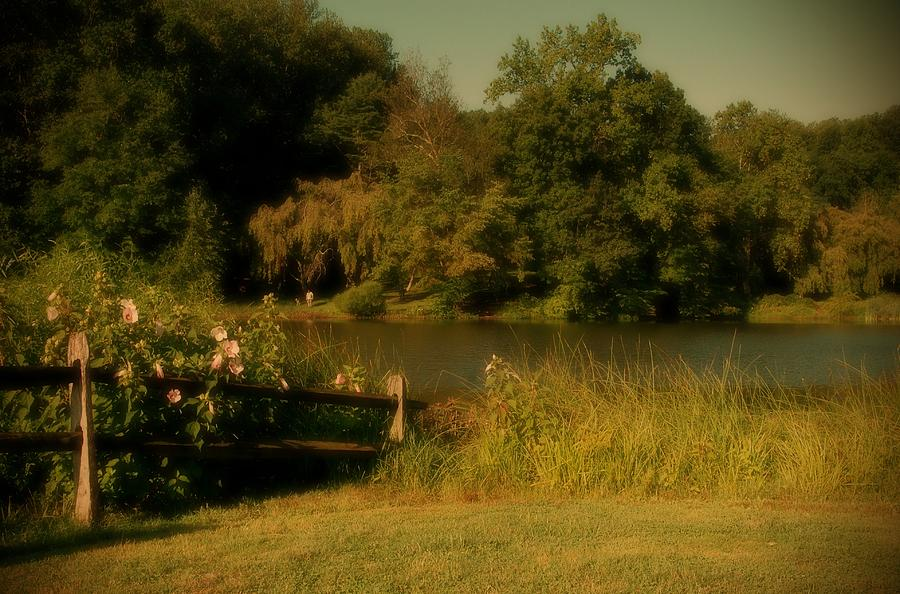 Summer Dream - Holmdel Park Photograph