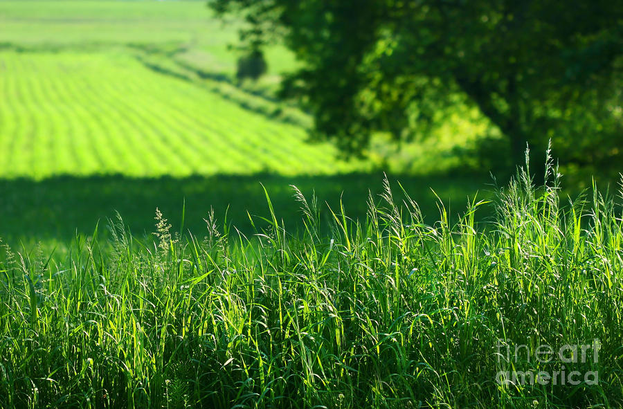 Summer Fields Of Green Digital Art  - Summer Fields Of Green Fine Art Print