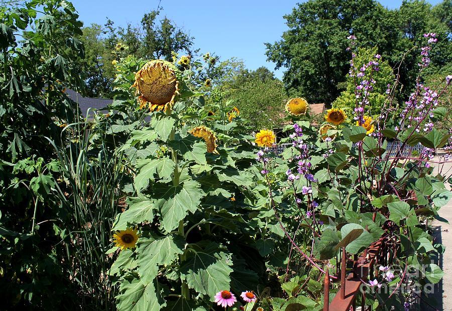 Sunflowers Photograph - Summer Garden by Theresa Willingham