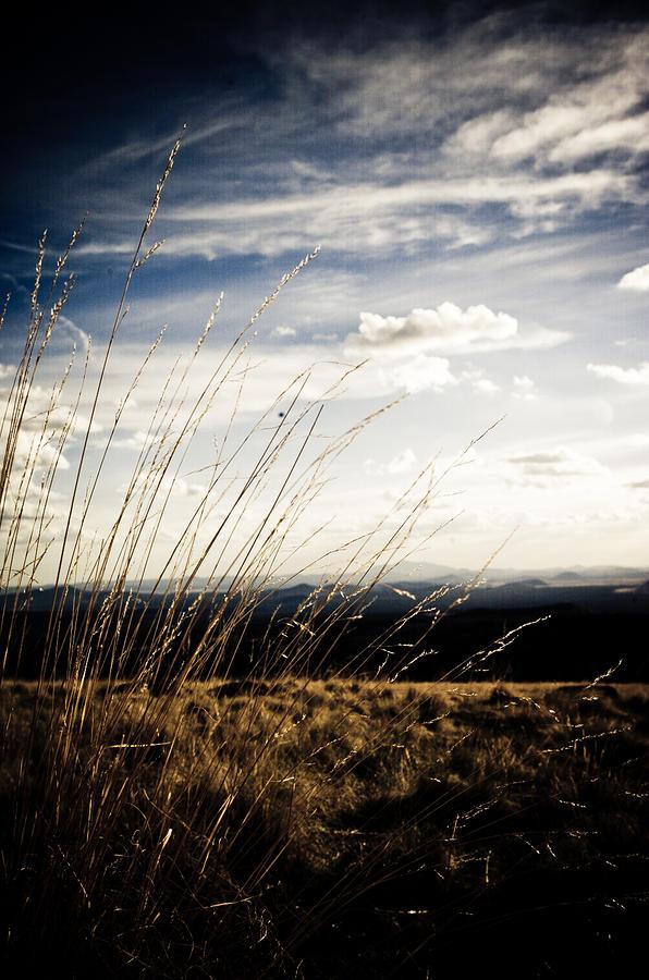 Summer Grass Photograph