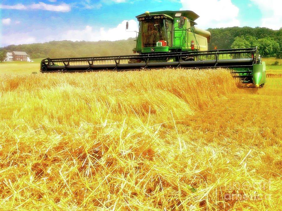 Summer Harvest Photograph  - Summer Harvest Fine Art Print