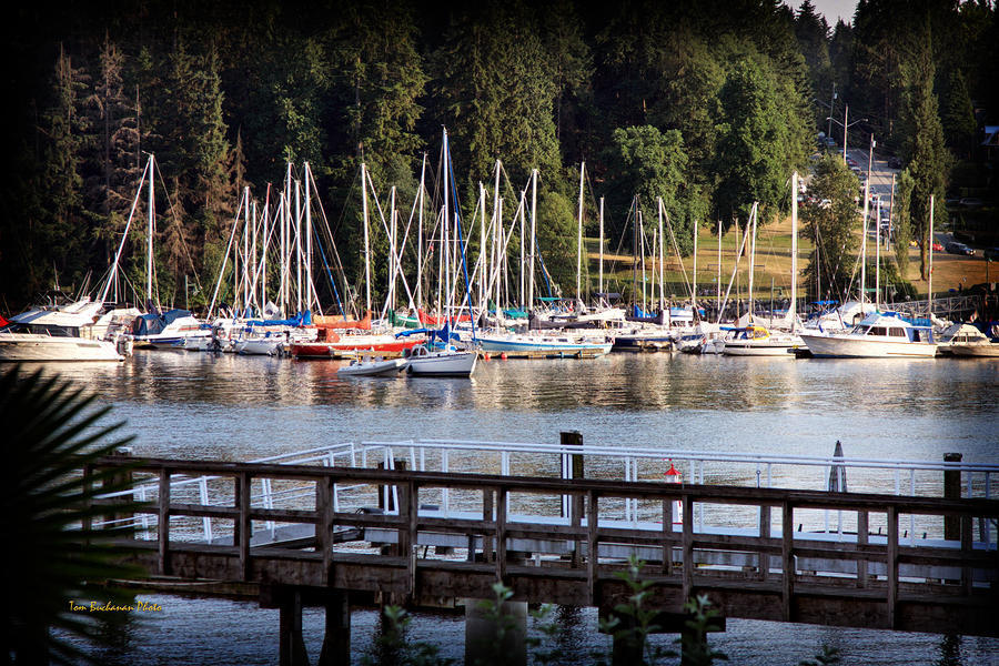 Summer In Deep Cove Photograph