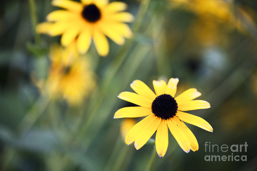 Summer Memories  Photograph  - Summer Memories  Fine Art Print