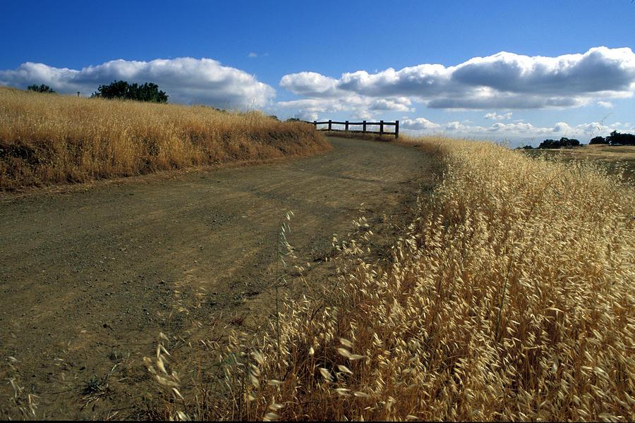 Summer Road Photograph