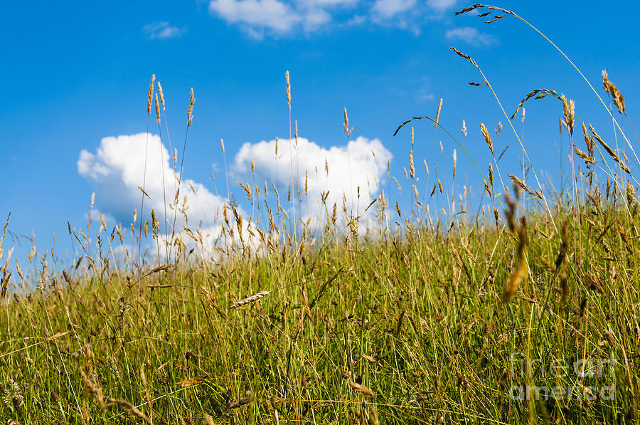 Pasture Field Photograph - Summer Serenity by Thomas R Fletcher
