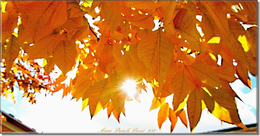 Trees Photograph - Sun Kissed  Deciduous by Danielle  Parent
