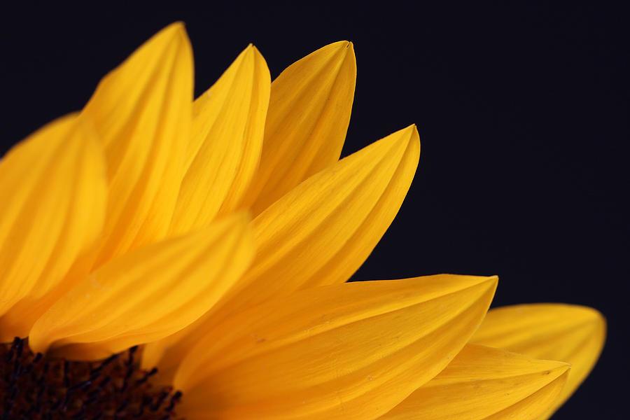 Sun On Earth Photograph