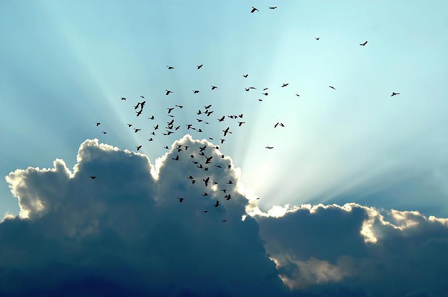 Sun Ray Aerobatics Blue Sky Photograph
