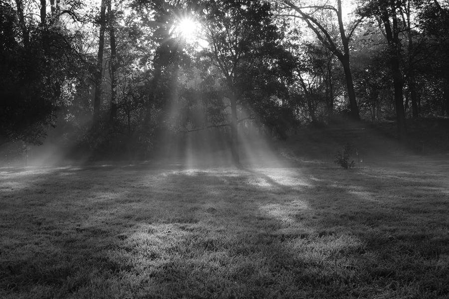 Sun Rays Though Fog Photograph