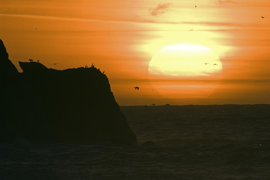 Sun Setting With Flying Birds Photograph