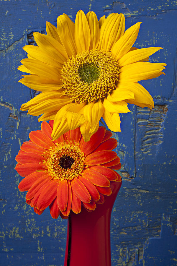 Sunflower And Mum Photograph  - Sunflower And Mum Fine Art Print