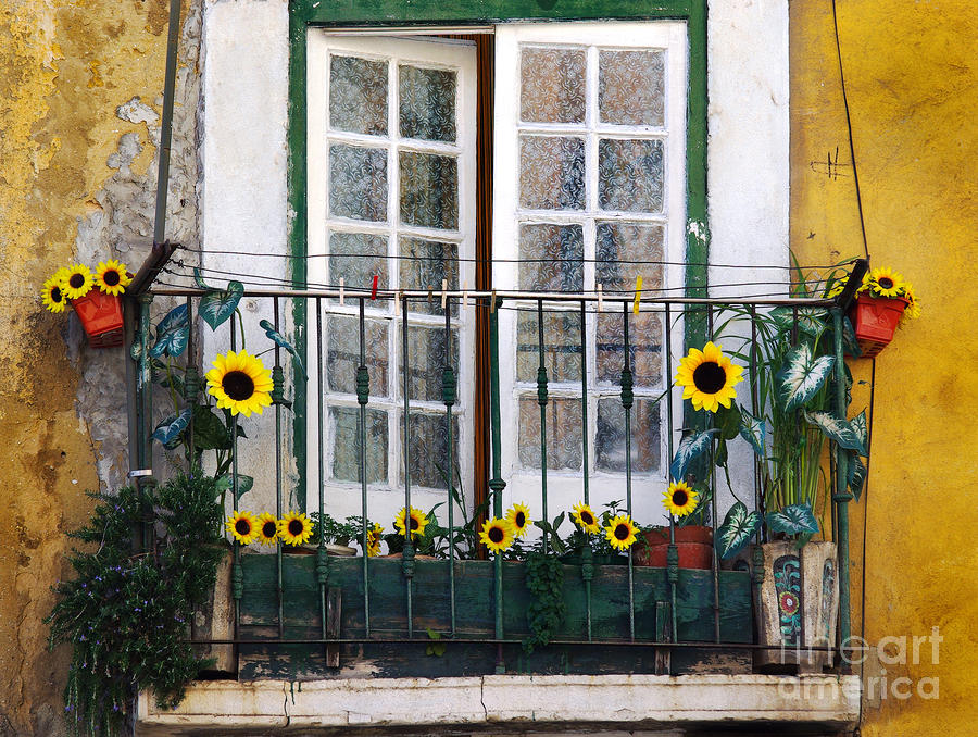 Sunflower Balcony Photograph