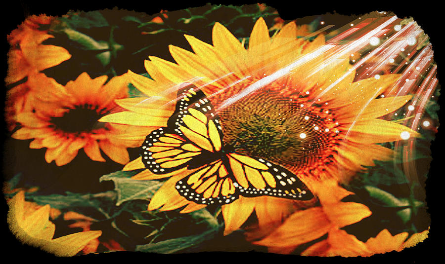 Sunflower Sun Monarch Butterfly Photograph By Debra Miller