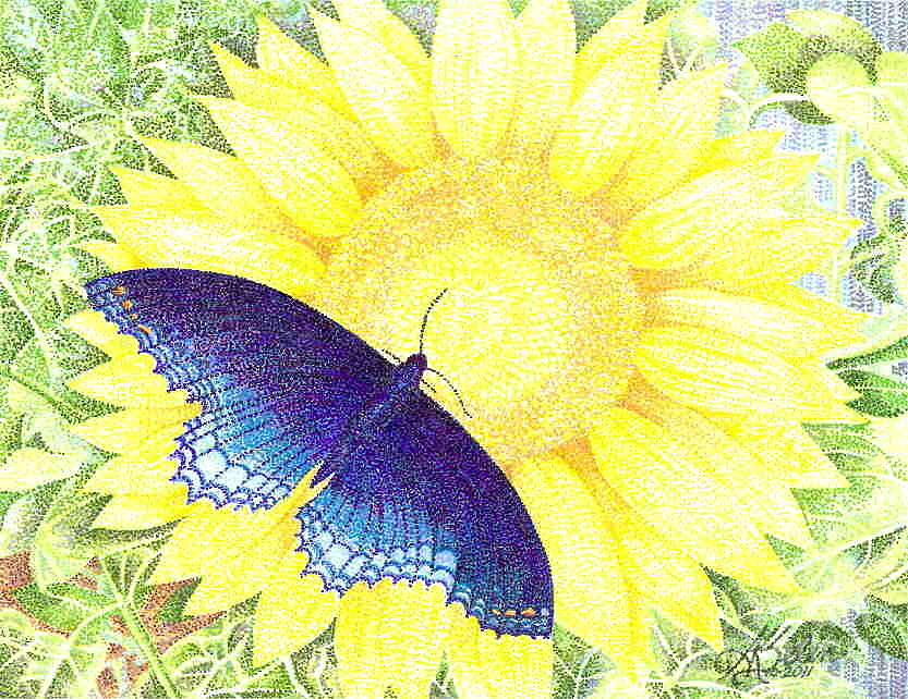 Sunflower With Blue Butterfly Photograph by Ann Selin Dorsey