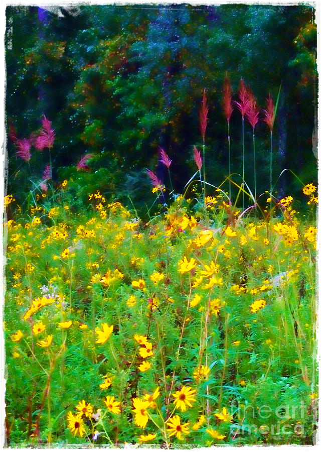 Sunflowers And Grasses Photograph