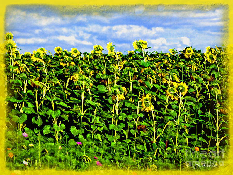 Sunflowers In France Photograph