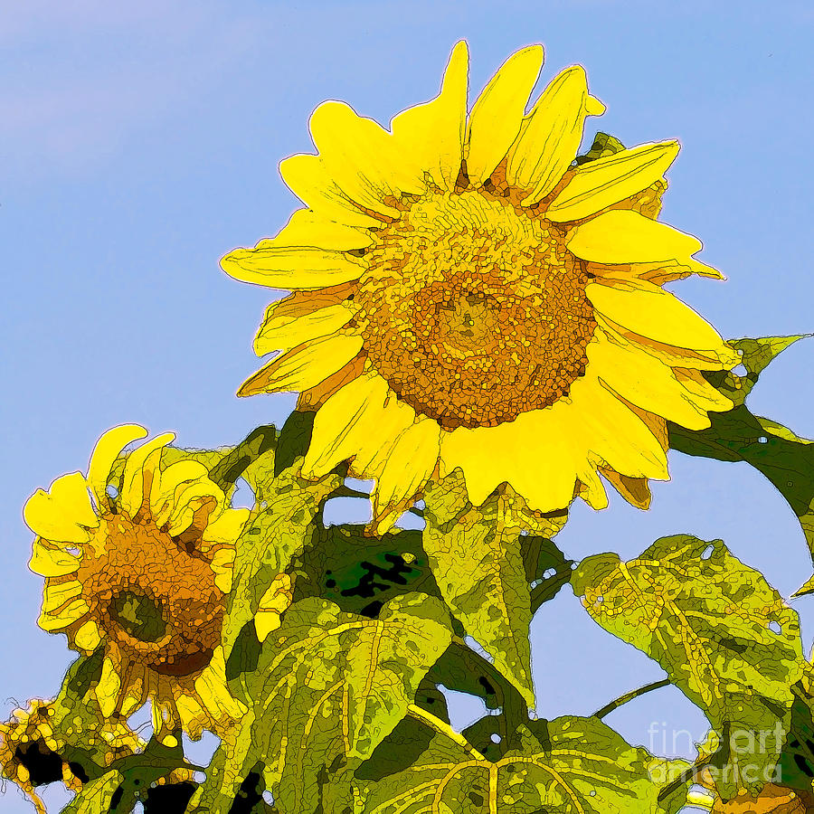 Sunflowers Digital Art - Sunflowers In Morning by Artist and Photographer Laura Wrede