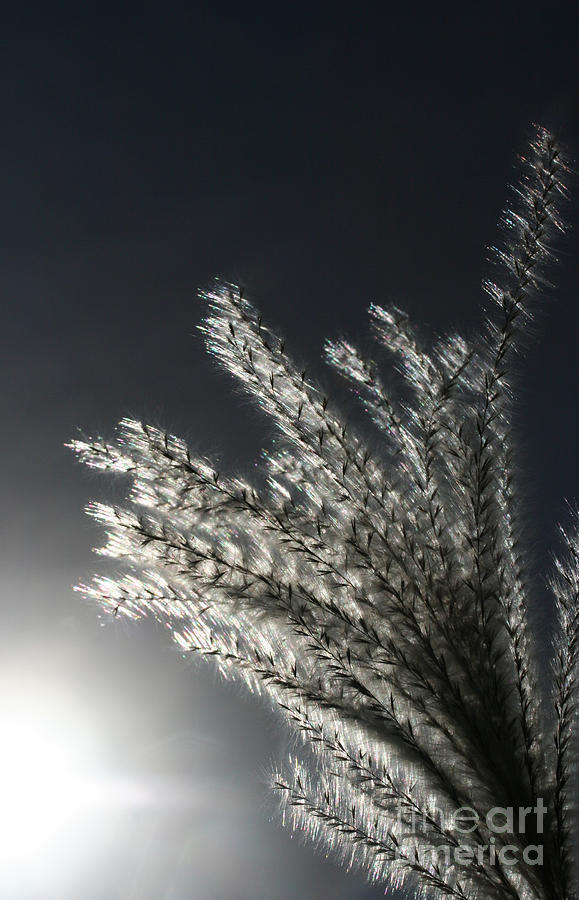 Sunlight Grass Photograph  - Sunlight Grass Fine Art Print