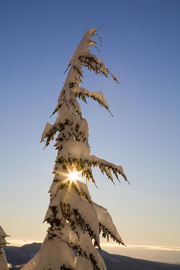 Sunlight Through Snow-covered Tree Photograph
