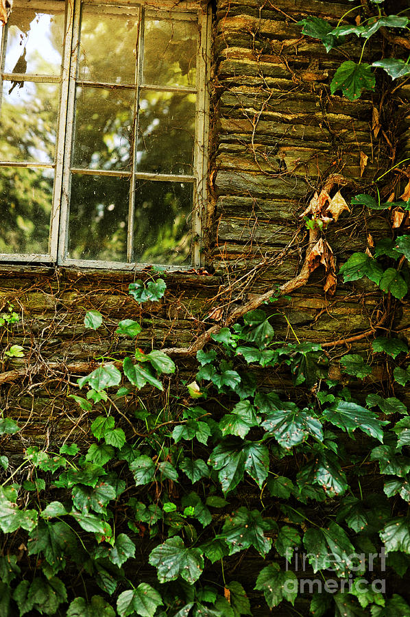 Sunlit Window And Grapevines Photograph
