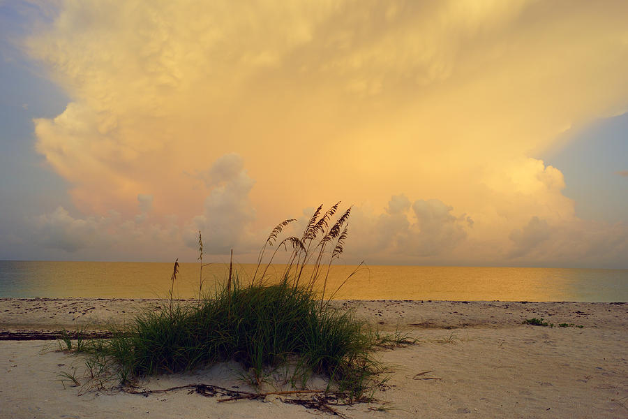 Sunrise And Sea Oats Photograph