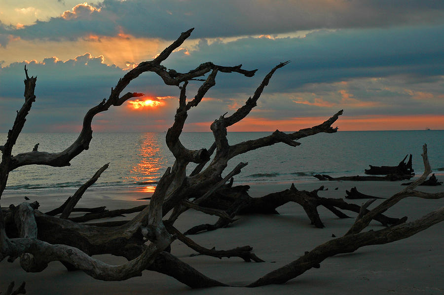 Sunrise At Driftwood Beach 2.2 Photograph  - Sunrise At Driftwood Beach 2.2 Fine Art Print