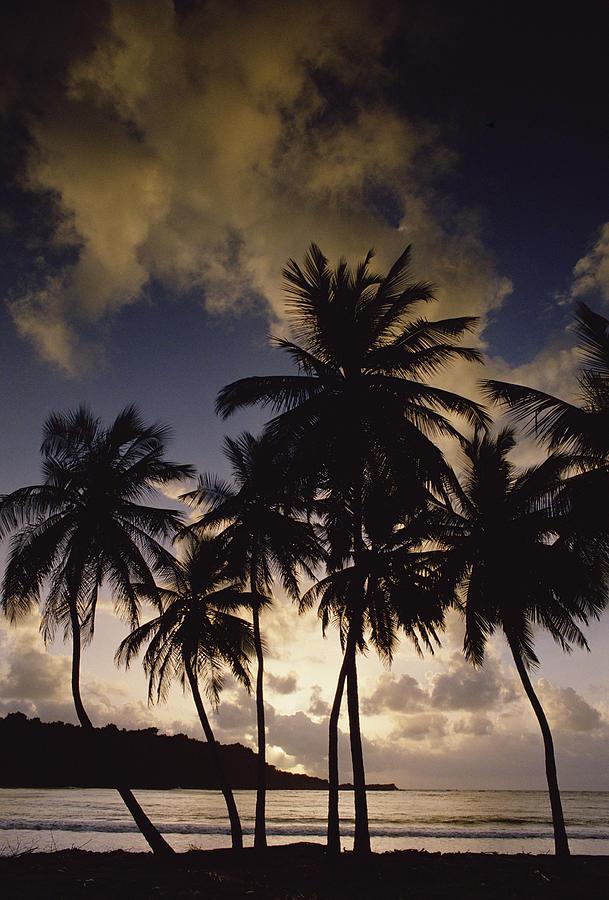 Mp Photograph - Sunrise At La Sagesse Bay Over Marquis by Gerry Ellis
