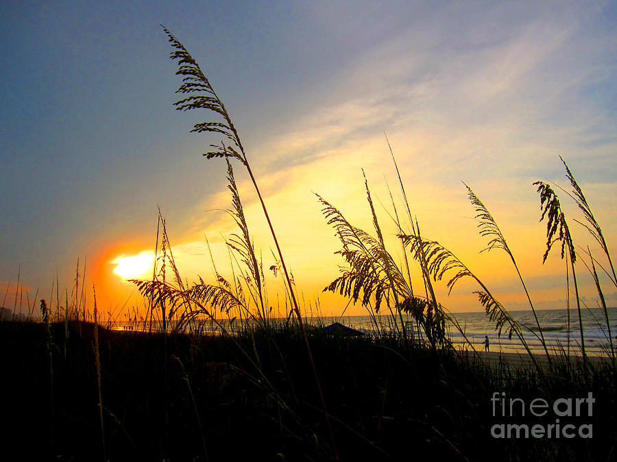Sunrise Behind Sea Oats Photograph