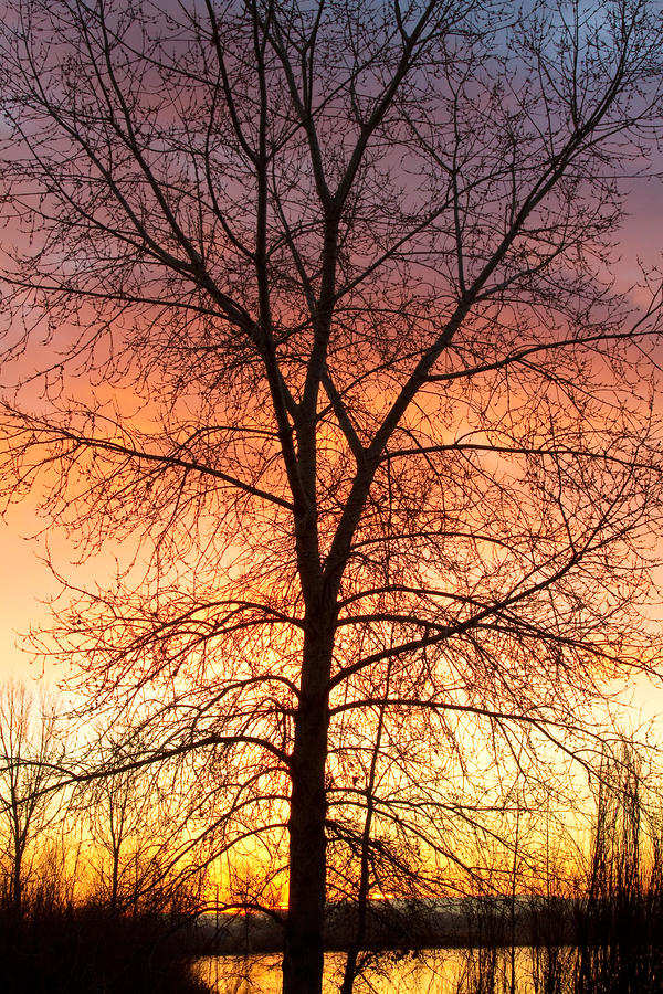 Sunrise December 16th 2010 Photograph  - Sunrise December 16th 2010 Fine Art Print