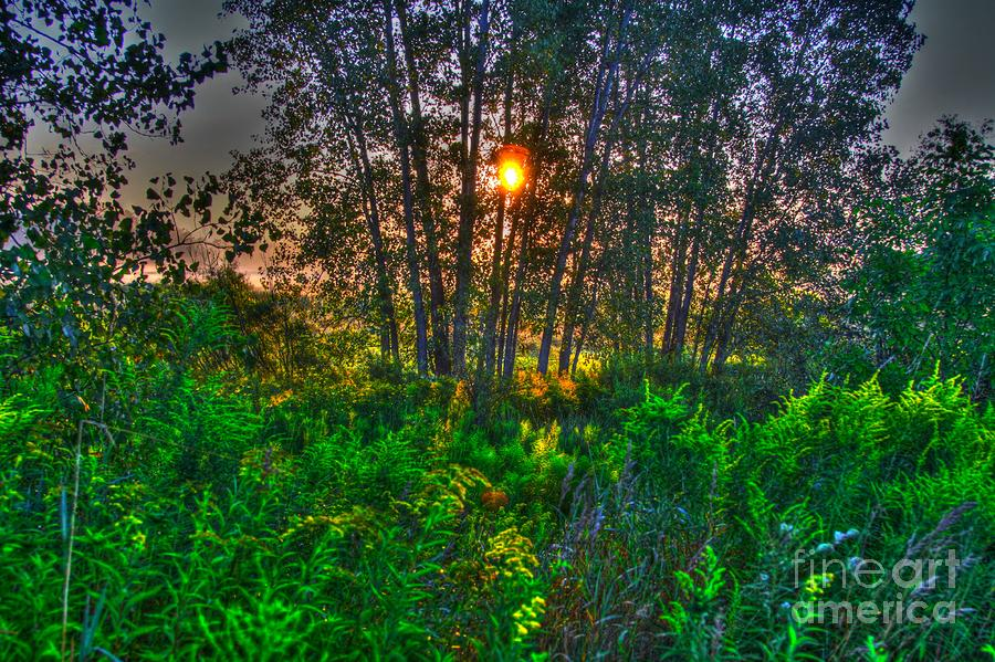 Sunrise In The Swamp-4 Photograph  - Sunrise In The Swamp-4 Fine Art Print
