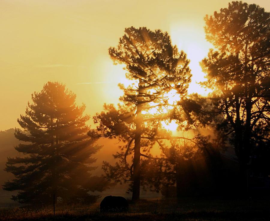 Nature Photograph - Sunrise by Karen Harrison