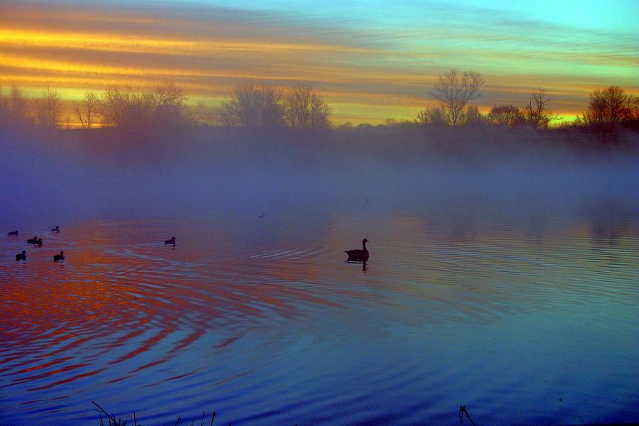 Ducks Photograph - Sunrise On Duck Pond by Laurie Prentice
