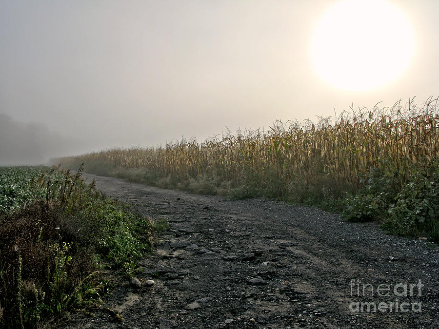 Sunrise Over Country Road Photograph  - Sunrise Over Country Road Fine Art Print