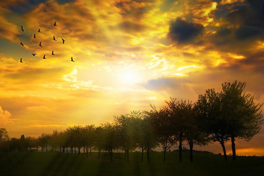 Sunrise Over Tree Line Photograph