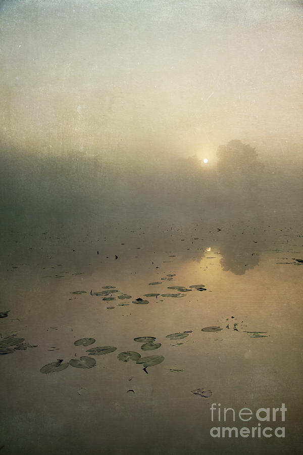 Sunrise Through Mist Photograph