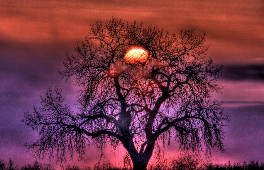 Sunrise Through The Foggy Tree Photograph