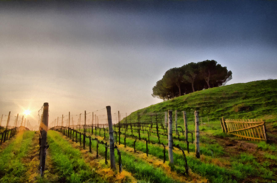 Sunrise Through The Vineyards Painting  - Sunrise Through The Vineyards Fine Art Print