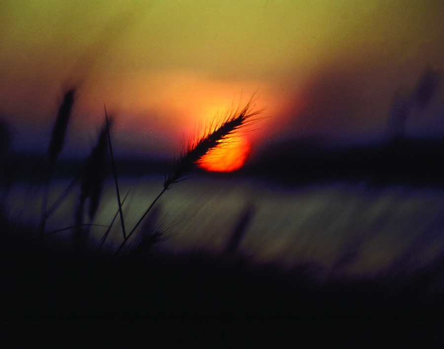 Sunset And Sea Oats Holden Beach North Carolina Photograph