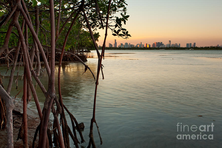 Sunset At Miami Behind Wild Mangrove Forest Photograph