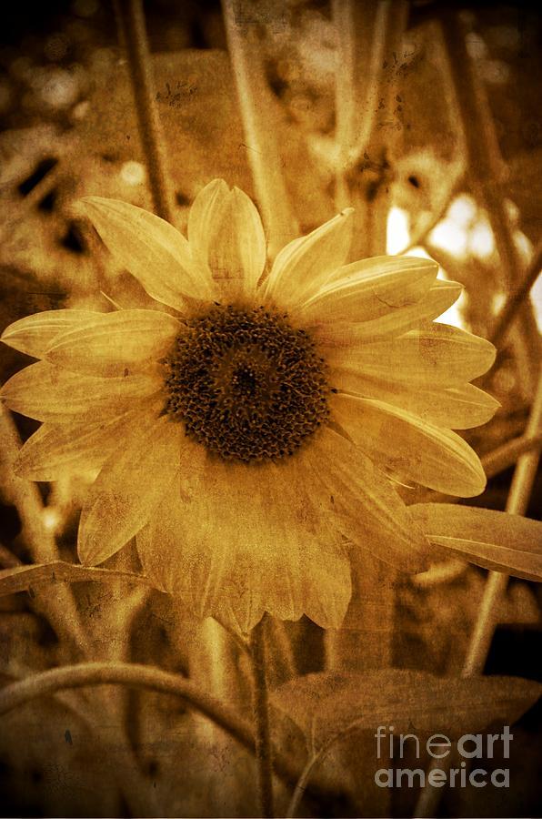 Sunset Flower Photograph