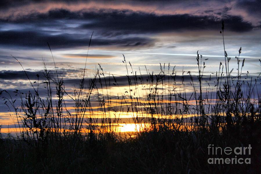 Sunset Grasses Photograph
