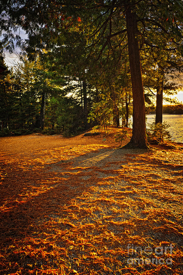 Trees Photograph - Sunset In Woods At Lake Shore by Elena Elisseeva