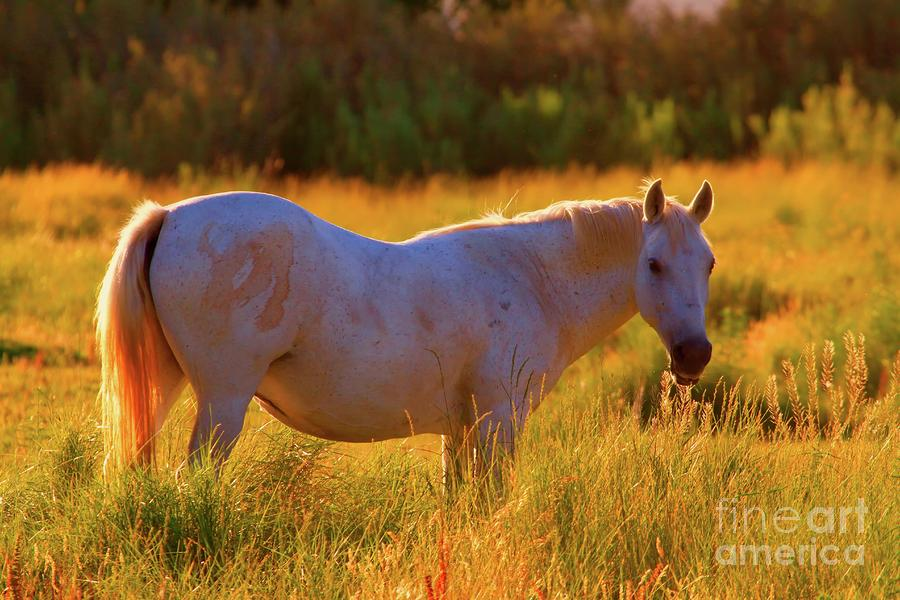 Sunset Mare Photograph  - Sunset Mare Fine Art Print