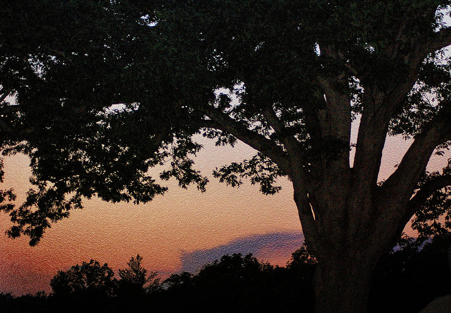 Sunset Over A Witness Tree Photograph