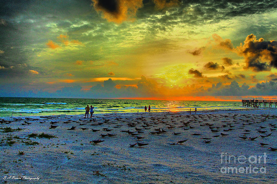 Sunset Over Skimmer Colony Photograph  - Sunset Over Skimmer Colony Fine Art Print